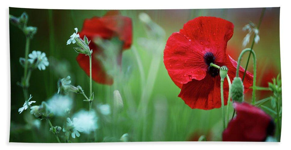 Poppy Beach Towel featuring the photograph Red Corn Poppy Flowers by Nailia Schwarz