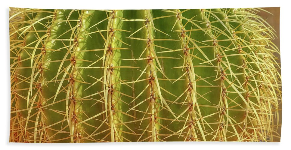 Cactus Beach Sheet featuring the photograph Barrel Cactus Royal Palms Phoenix by Edward Fielding