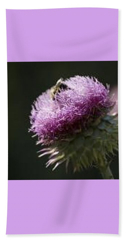 Bee Beach Towel featuring the photograph Bee on Thistle by Nancy Ayanna Wyatt