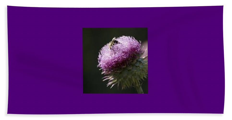 Bee Beach Sheet featuring the photograph Bee On Thistle by Nancy Ayanna Wyatt