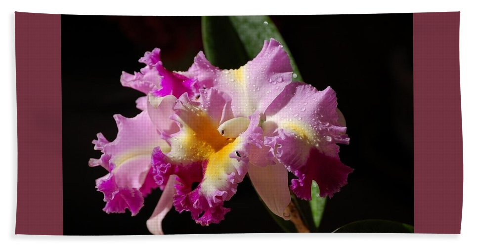 Orchid Beach Towel featuring the photograph Best Cattleya by Nancy Ayanna Wyatt