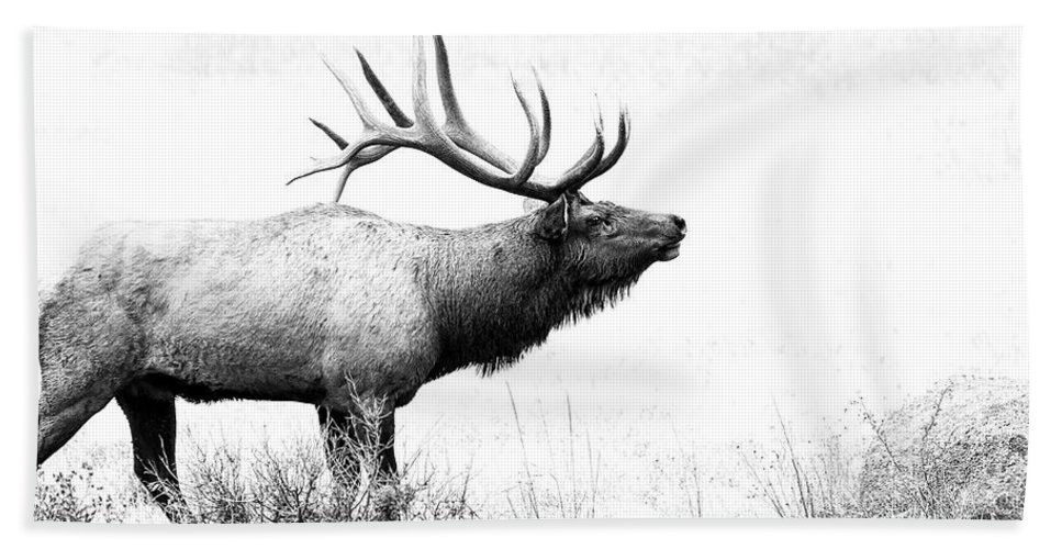 Elk Beach Towel featuring the photograph Bull Elk In Rut by Perspective Imagery