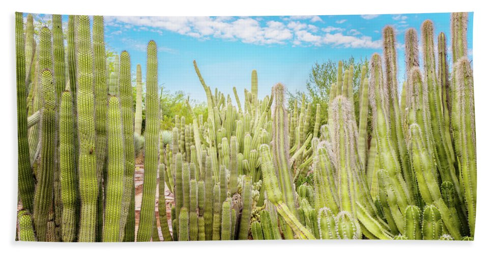 Cactus Beach Towel featuring the photograph Cactus Garden by Bill Carson Photography