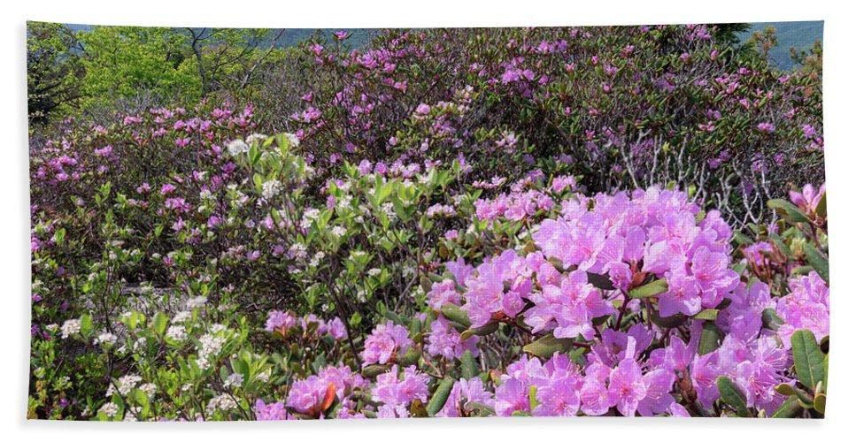 Catawba Rhododendron Beach Towel featuring the photograph Catawba Rhododendron Table Rock by Mike Koenig