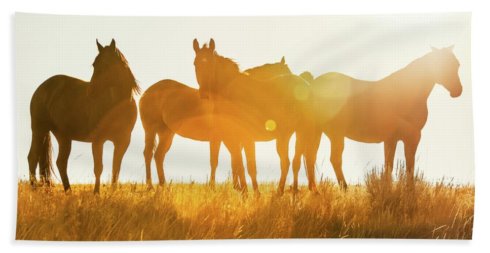 Horses Beach Towel featuring the photograph Equine Glow by Todd Klassy