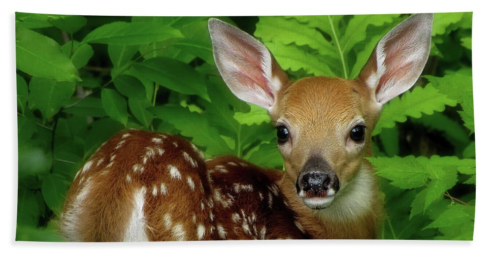 Fawn Beach Towel featuring the photograph Fawn by Jerry LoFaro