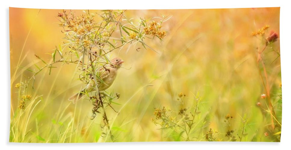 Aves Beach Towel featuring the photograph Field Sparrow by Heather Hubbard