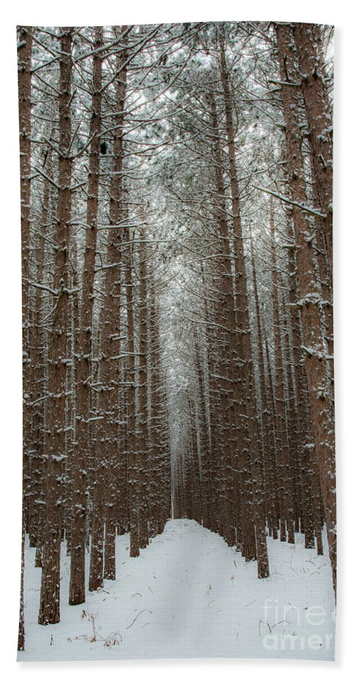 Sleeping Bear Dunes Beach Towel featuring the photograph Forest In Sleeping Bear Dunes In January by Twenty Two North Photography