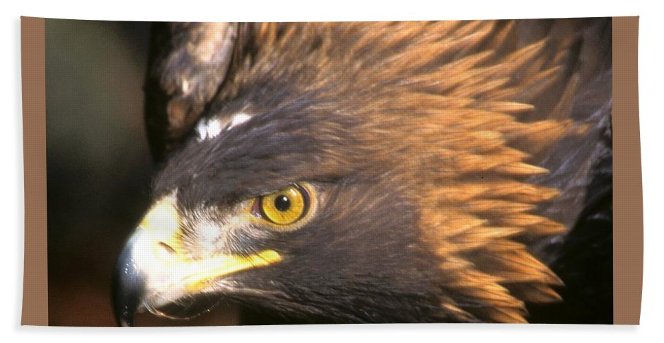 Eagles Beach Towel featuring the photograph Golden Eagles Mascot 10 by Larry Allan