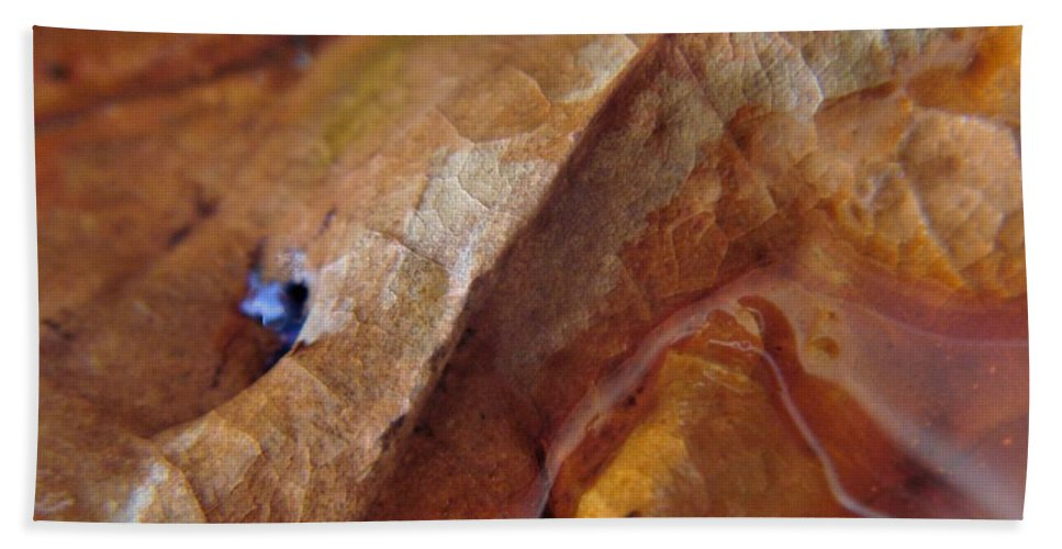 Abstract Beach Towel featuring the photograph Leaf Series 1 by Nordan Nielsen