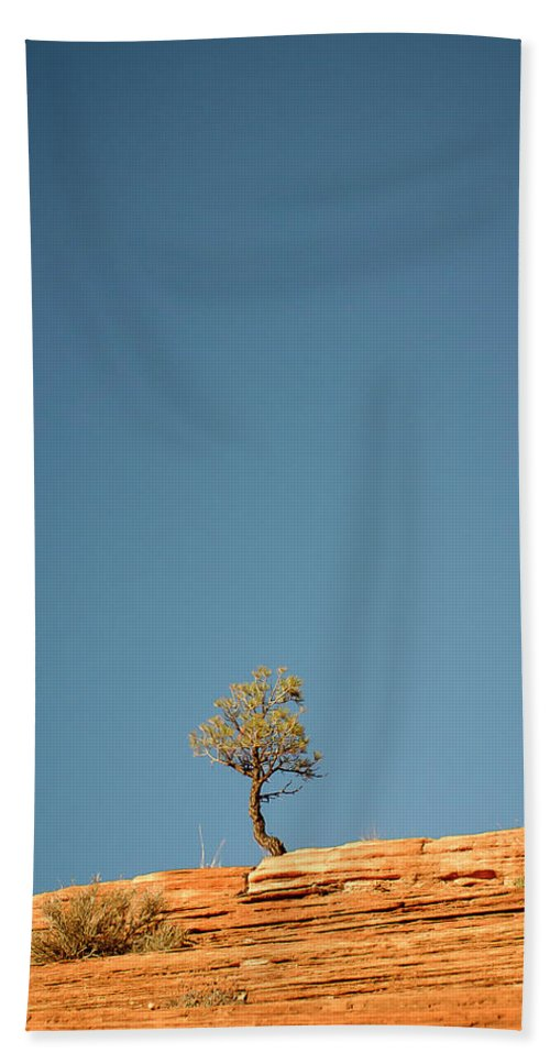 3scape Beach Towel featuring the photograph Lone Tree Big Sky by Adam Romanowicz
