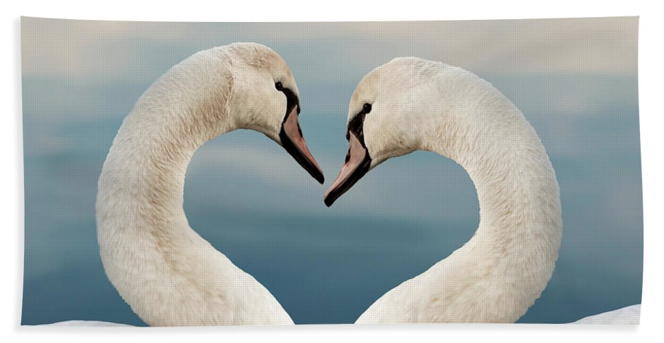 Love Beach Towel featuring the photograph Love Swans by Delphimages Photo Creations