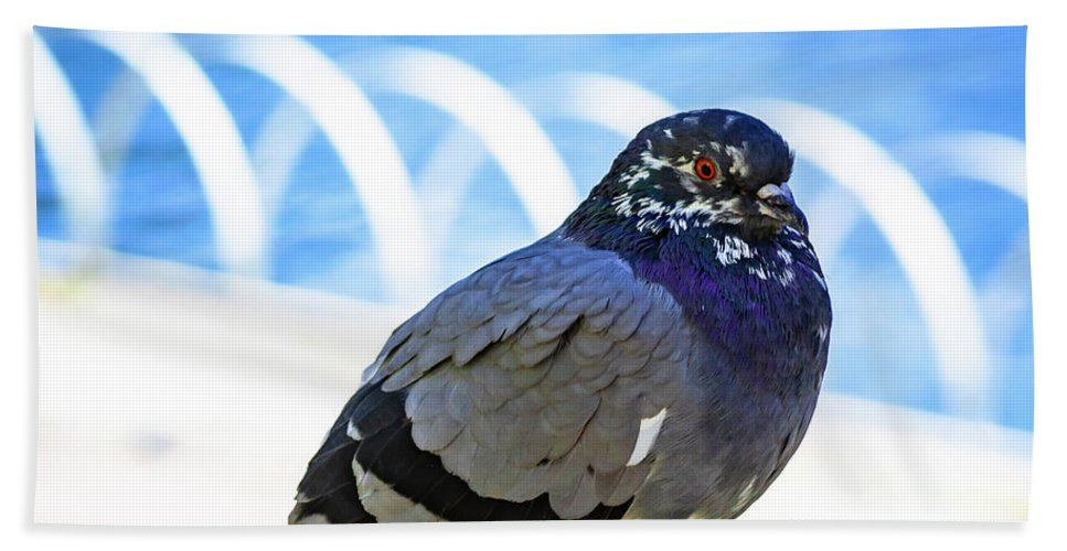 Pigeon Beach Towel featuring the photograph Mr. Pigeon by Borja Robles