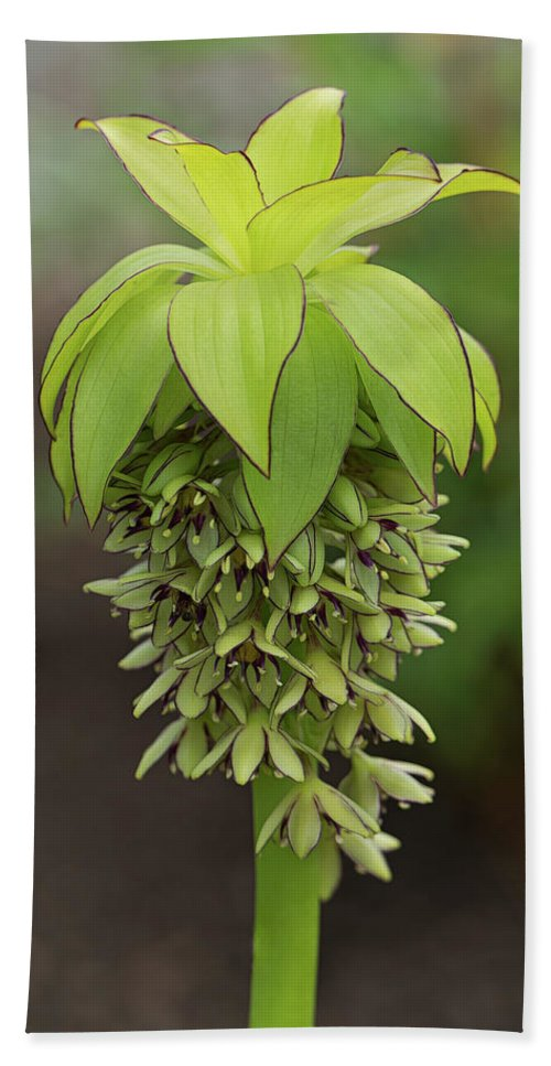 Floral Photography Beach Towel featuring the photograph Pineapple Lily by Pat Watson
