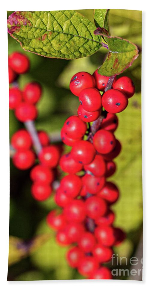 America Beach Towel featuring the photograph Red Berries by Thomas Marchessault