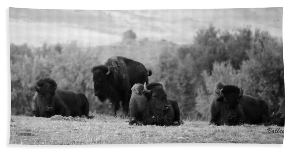 Nature Beach Sheet featuring the photograph Rocky Mountain Bison by Vallee Johnson