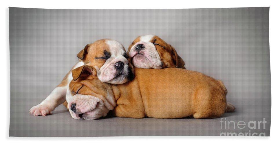 Image result for sleeping bulldog