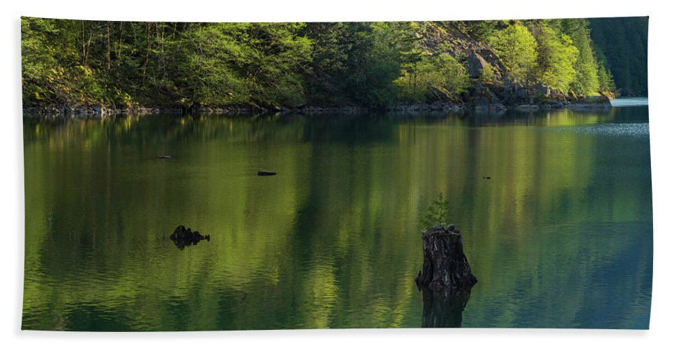 Alone Beach Towel featuring the photograph Solitary Tree Forest Reflections by Mike Reid