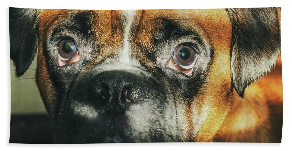 Dog Beach Towel featuring the photograph Where'd Everybody Go by CWinslow Shafer