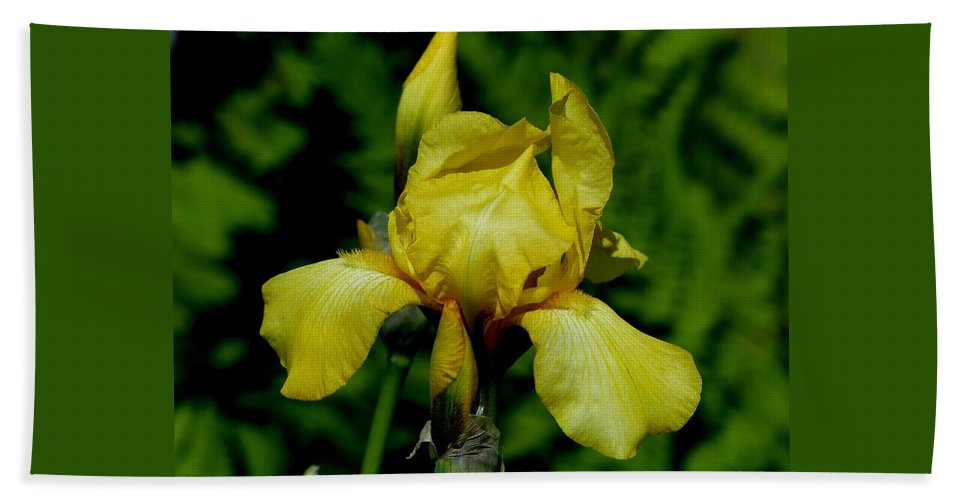 Outdoors Beach Towel featuring the photograph Yellow Glory by Charles Ford