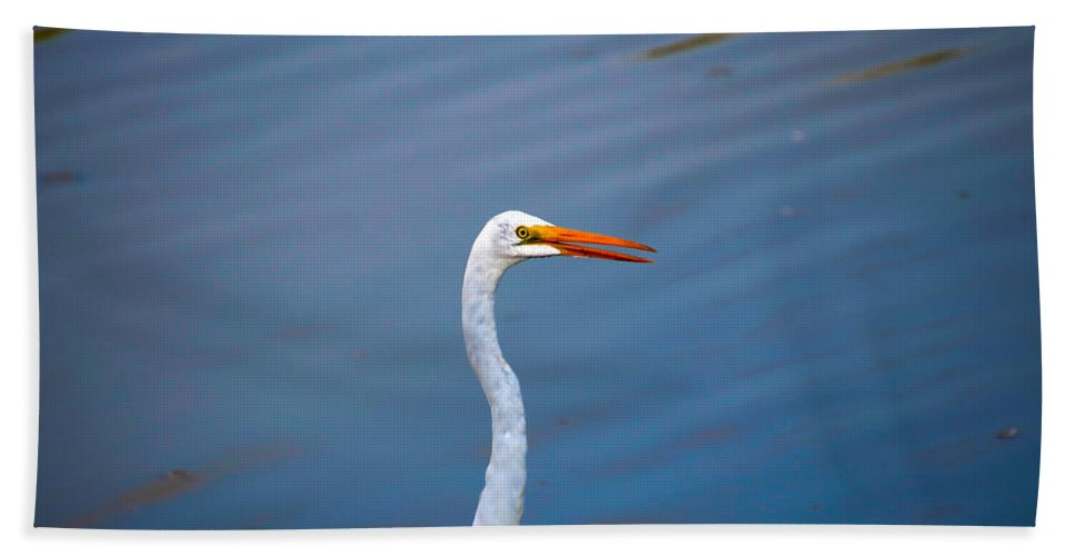 Beach Towel featuring the photograph Long Neck by Tony Umana