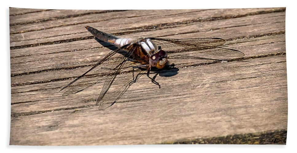 Insects Beach Towel featuring the photograph 20-0609-0227 by Anthony Roma