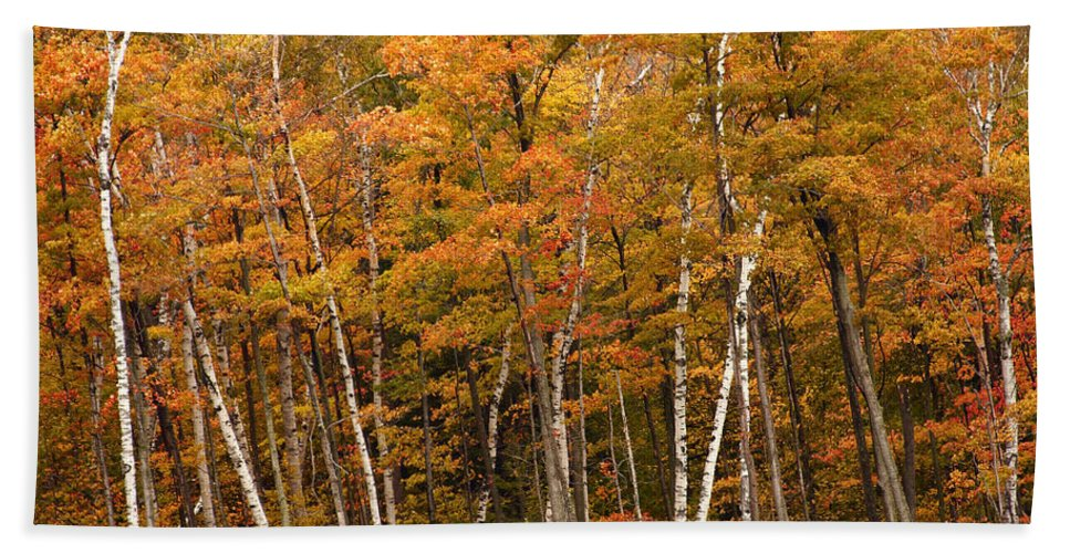 3scape Beach Towel featuring the photograph Autumn Glory by Adam Romanowicz