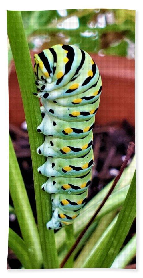 Caterpillar Beach Towel featuring the photograph Caterpillar by Rob Hans