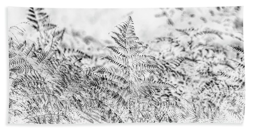 Forest Beach Towel featuring the photograph Ferny Grove by Jorgo Photography - Wall Art Gallery