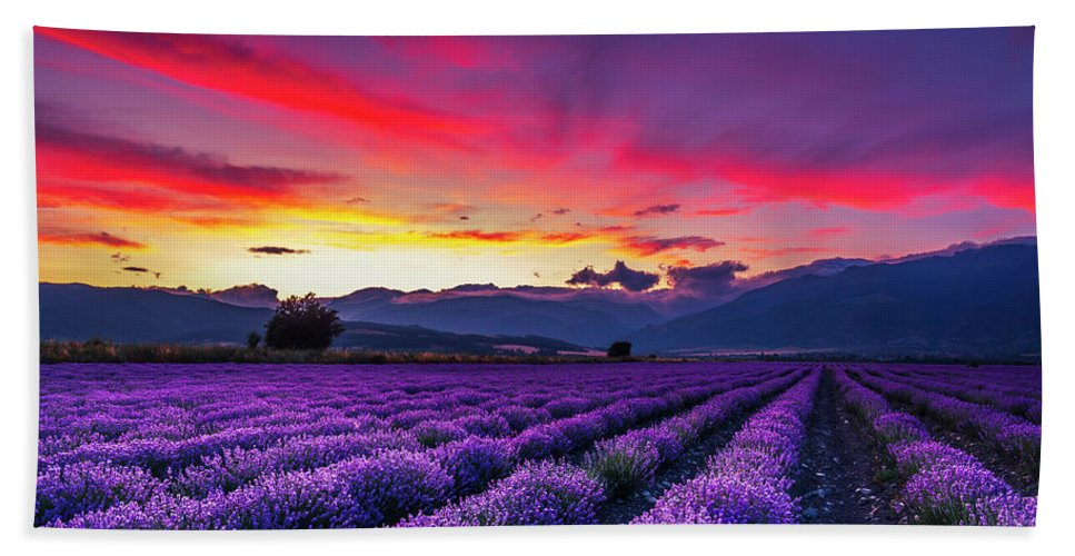 Dusk Beach Towel featuring the photograph Lavender Season by Evgeni Dinev