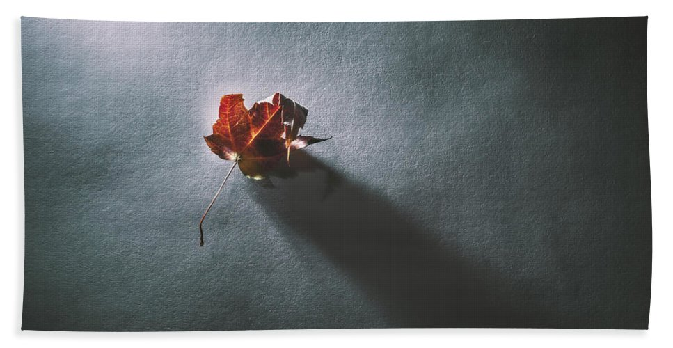 Leaf Beach Towel featuring the photograph Leaf And Shadow by Scott Norris