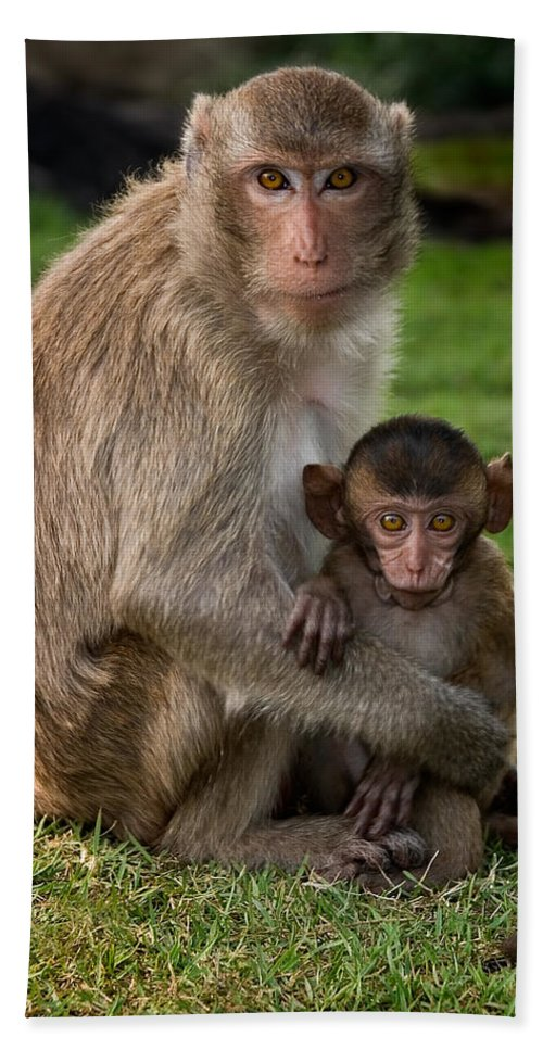 3scape Beach Towel featuring the photograph Macaque Monkey Family by Adam Romanowicz