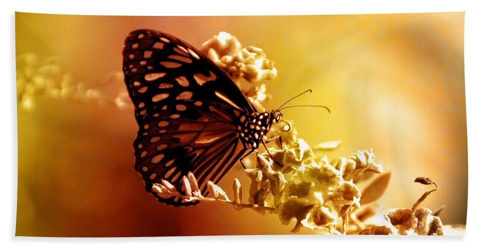 Butterfly Beach Towel featuring the photograph Radiance by Holly Kempe