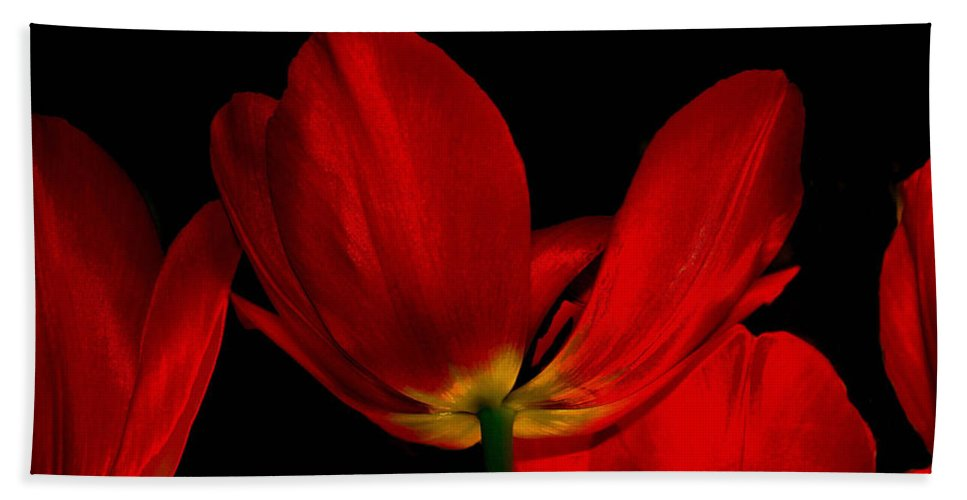 Flowers Beach Towel featuring the photograph Red Silk by Linda Sannuti