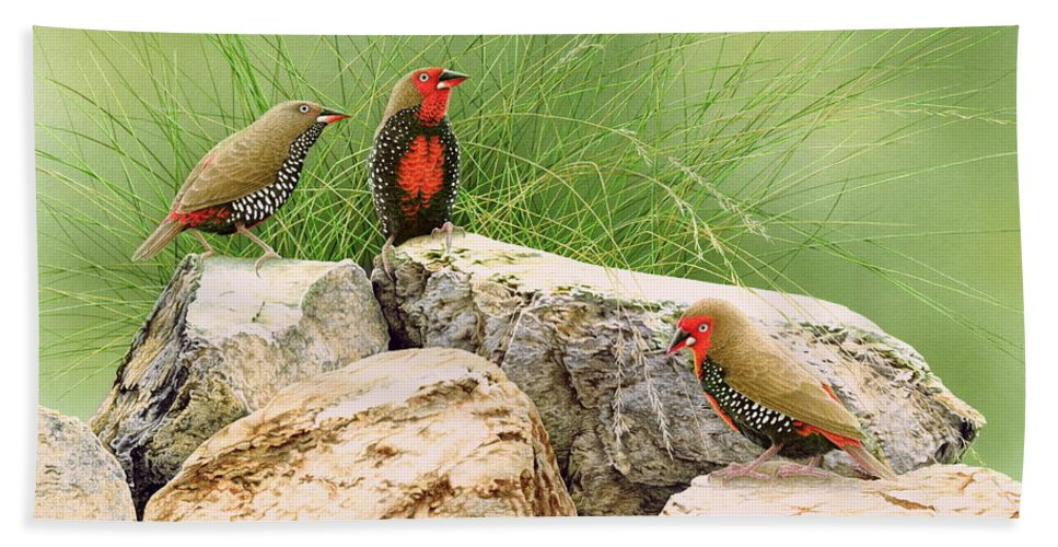 Bird Beach Towel featuring the painting Rock Stars - Painted Finches by Frances McMahon