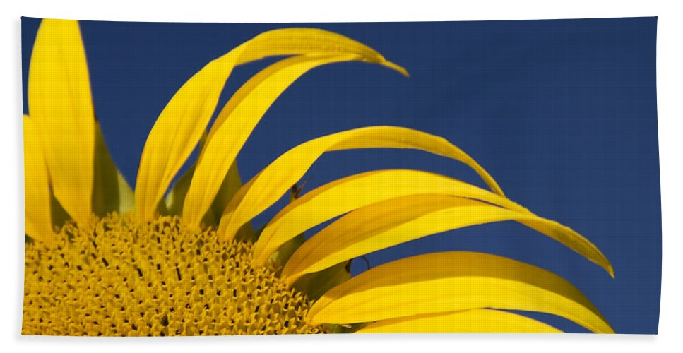 3scape Beach Towel featuring the photograph Sunflower by Adam Romanowicz