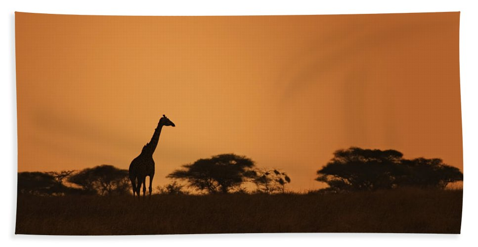 3scape Beach Towel featuring the photograph Sunset Over Tarangire by Adam Romanowicz
