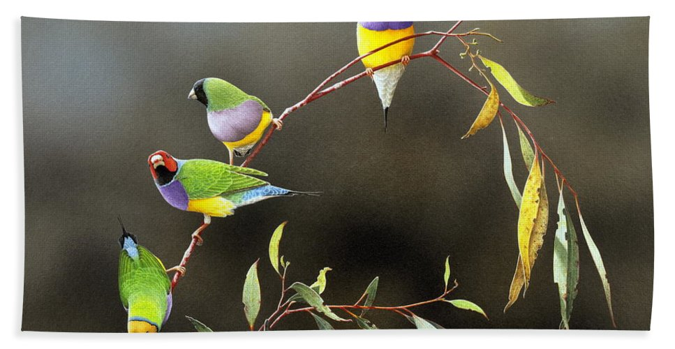 Bird Beach Towel featuring the painting Three Guys for Every Girl - Gouldian Finches by Frances McMahon