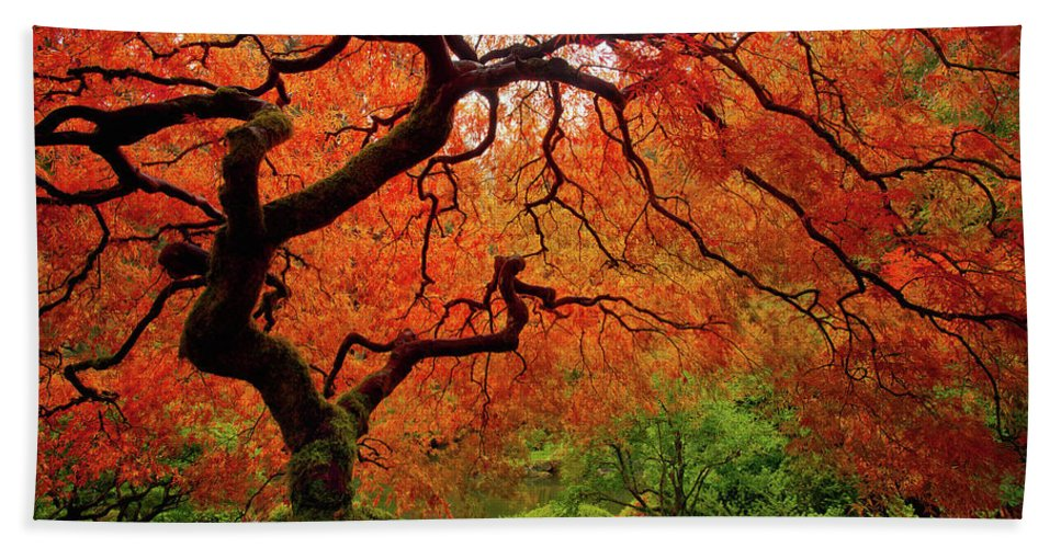 Fall Beach Towel featuring the photograph Tree Fire - New and Improved by Darren White
