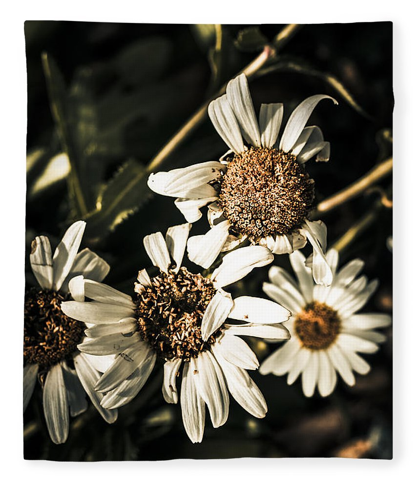 Daisy flowers dying slow death pushing up daisies fleece blanket dead fleece blanket featuring the photograph daisy flowers dying slow death pushing up daisies by izmirmasajfo
