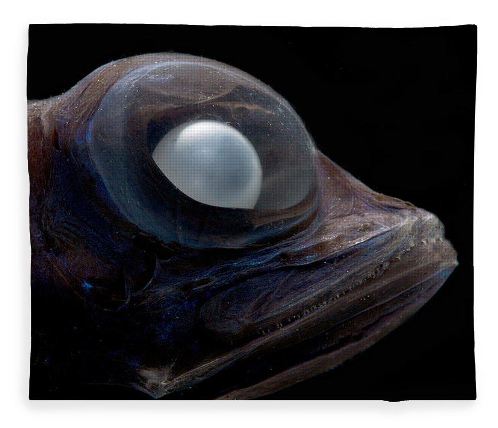 Platytroctidae Fleece Blanket featuring the photograph Dark Searsid Mentodus Facilis by Dant� Fenolio