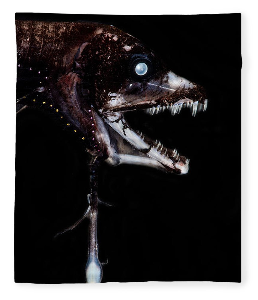 Dragonfish Fleece Blanket featuring the photograph Dragonfish Eustomias Triramis by Dant� Fenolio