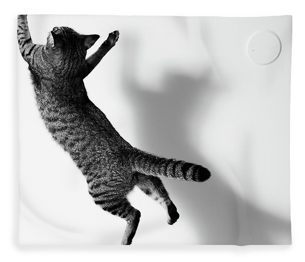Pets Fleece Blanket featuring the photograph Jumping Cat by Akimasa Harada