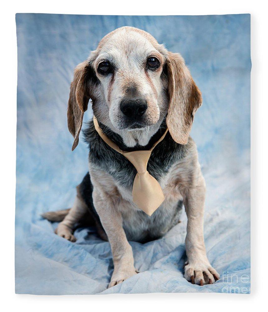 Beagle Fleece Blanket featuring the photograph Kippy Beagle Senior by Iris Richardson
