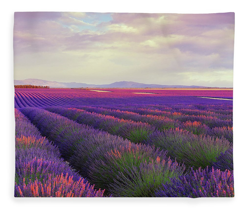 Dawn Fleece Blanket featuring the photograph Lavender Field At Dusk by Mammuth