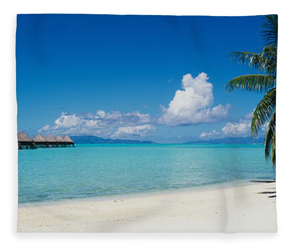 Photography Fleece Blanket featuring the photograph Palm Tree On The Beach, Moana Beach by Panoramic Images