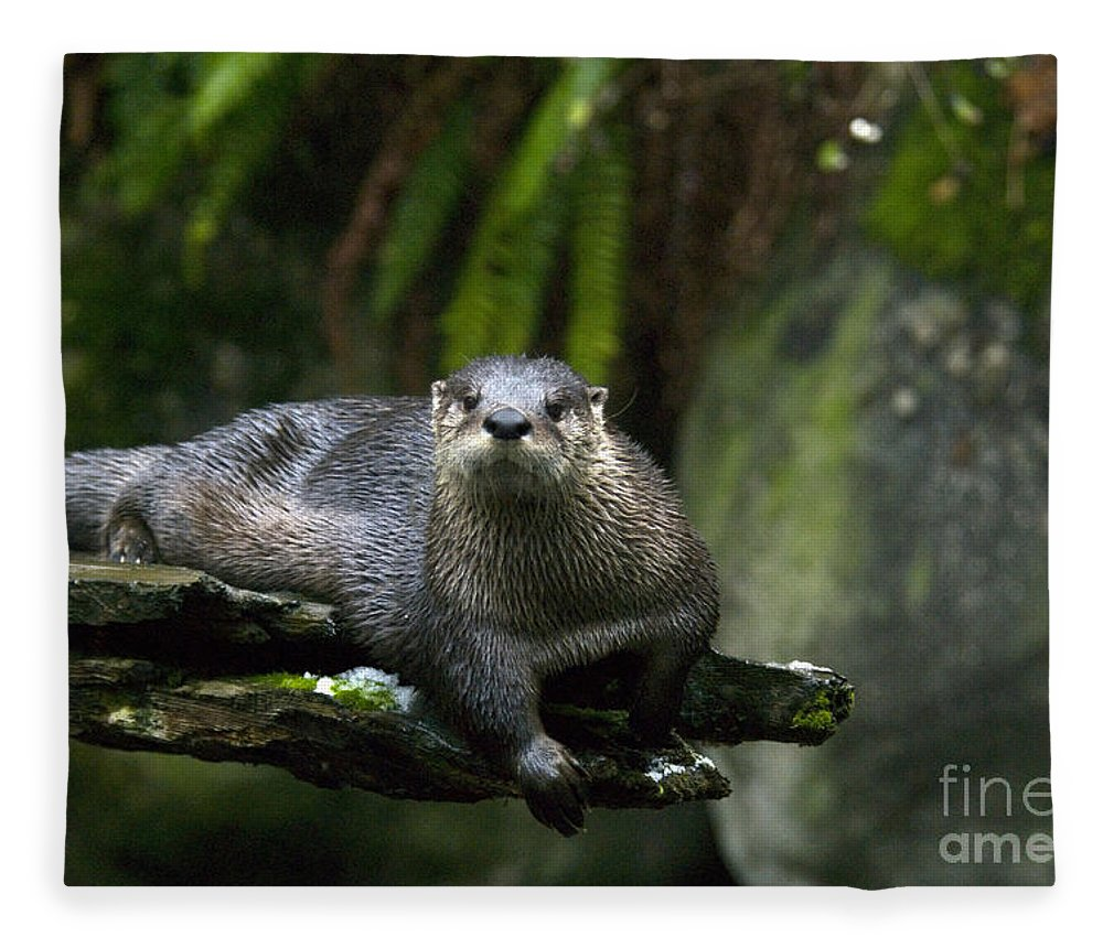 River Otter Fleece Blanket featuring the photograph River Otter by Mark Newman