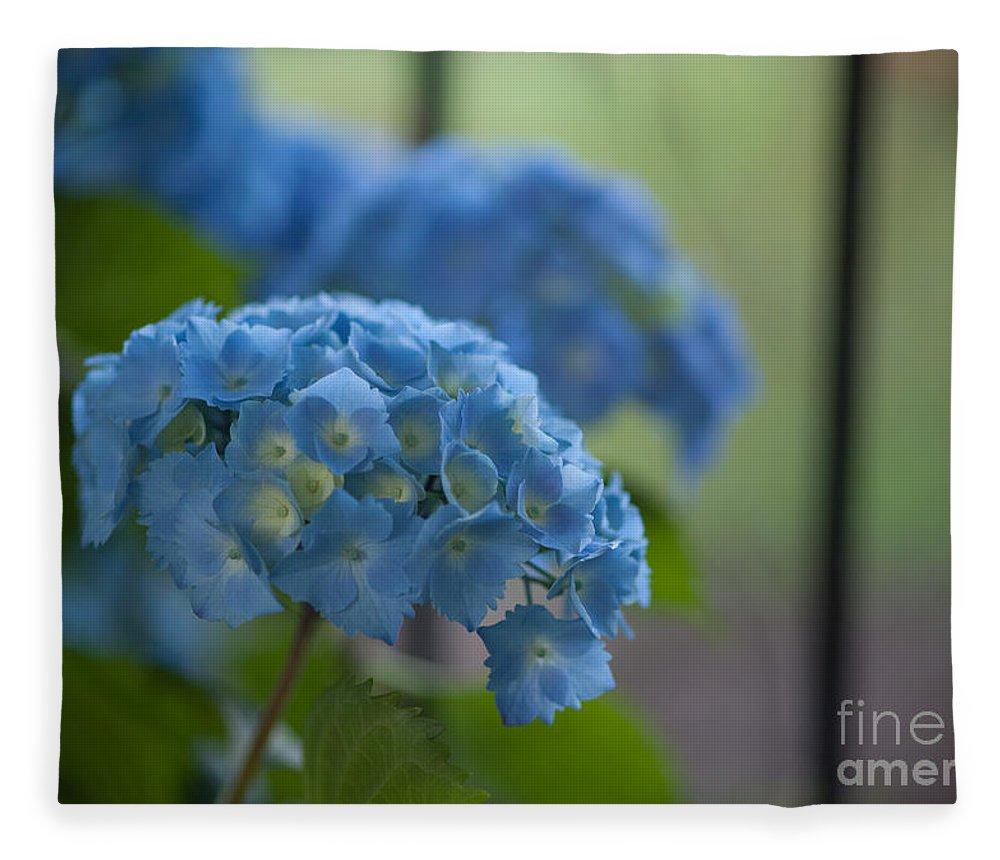 Hydrangea Fleece Blanket featuring the photograph Soft Blue Hydrangea by Mike Reid
