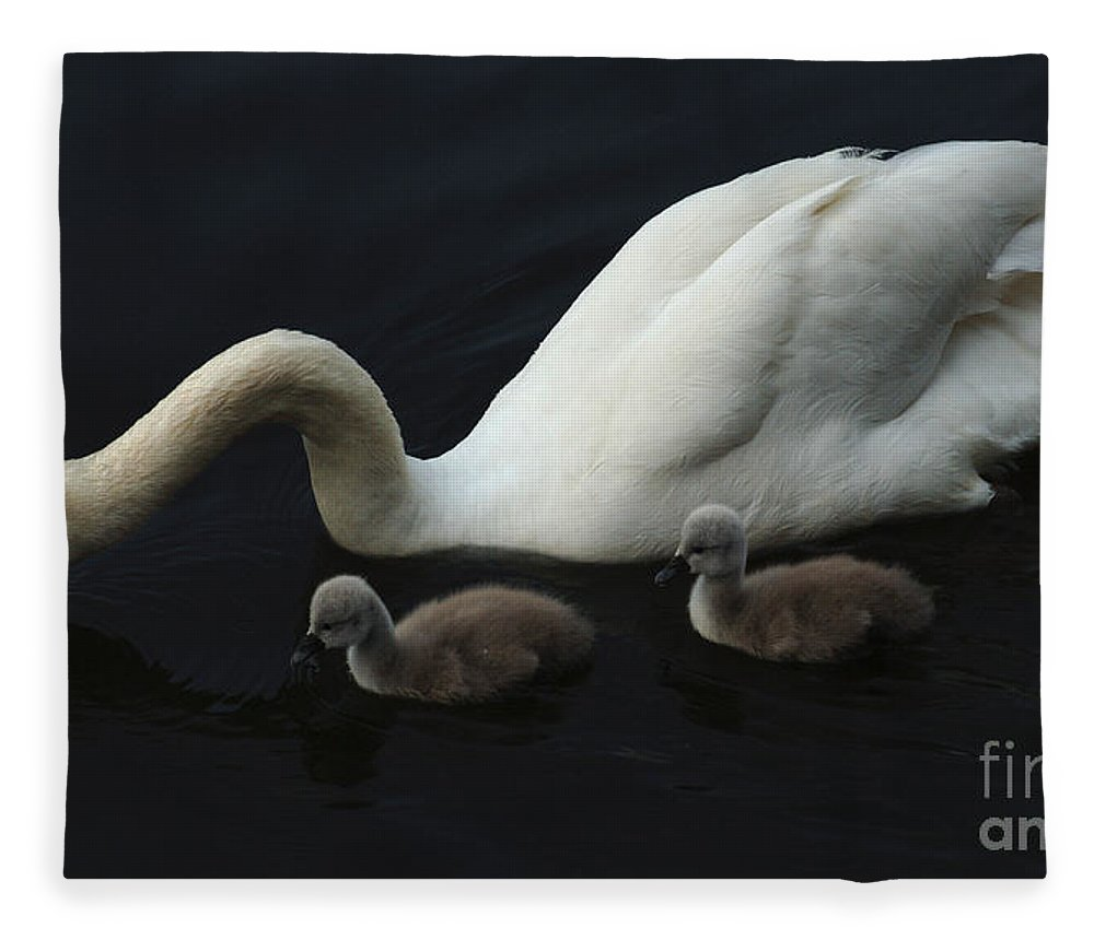 Swan Fleece Blanket featuring the photograph Swan Elegance by Bob Christopher