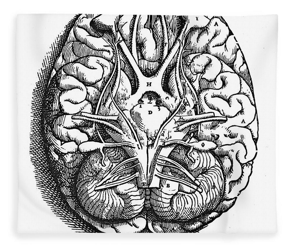 16th Century Fleece Blanket featuring the photograph Vesalius: Brain by Granger